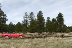 944 in the pines of Flagstaff
